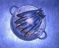 Blauwe Makreel op zilveren schotel Stock Foto's