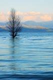 Blauwe meer en boom royalty-vrije stock fotografie
