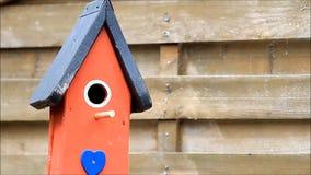 blauwe meesvogel die in het nestelen doos vliegen stock video