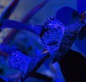 Blauwe nachtregen Stock Afbeeldingen