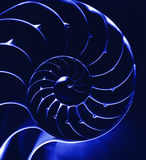 Blauwe nautilus, close-up Stock Fotografie