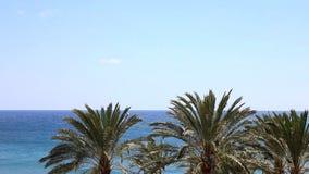 Blauwe oceaan met vele palmen met wind stock video