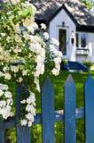 Blauwe omheining met witte bloemen stock fotografie