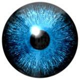 Blauwe oogtextuur stock illustratie