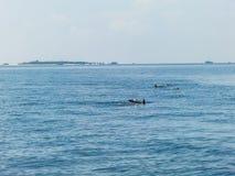 Blauwe overzees, hemel en dolfijnen Stock Foto