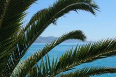 Blauwe overzees met palmbladen royalty-vrije stock fotografie