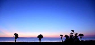 Blauwe Palm Dawn Stock Afbeelding