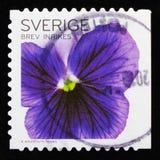 Blauwe Pansies, Flora Flowers - Algemene serie, circa 2010 Stock Foto's