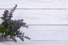 Blauwe penstemonbloemen royalty-vrije stock afbeelding