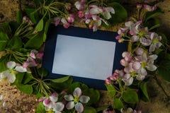 Blauwe photoframe met de verse takken van de de lentebloesem stock afbeeldingen