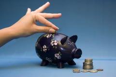 Blauwe Piggy stock foto