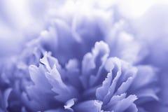 Blauwe pioenbloem Royalty-vrije Stock Foto's