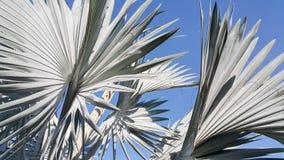 Blauwe plambladeren tegen duidelijke blauwe hemel Royalty-vrije Stock Foto