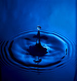 Blauwe Plons royalty-vrije stock foto