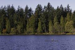 Blauwe reiger die zich op een login verloren lagune bevinden royalty-vrije stock fotografie