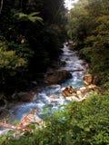Blauwe Rivier in Tropische Wildernis Stock Afbeeldingen