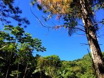 Blauwe schone hemel door de bomen Stock Afbeeldingen