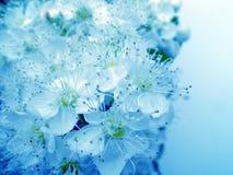 Blauwe schoonheid stock afbeeldingen