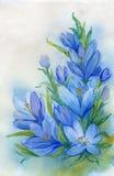 Blauwe sneeuwklokjes Stock Foto