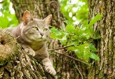 Blauwe tabby kat omhoog in een boom Royalty-vrije Stock Afbeeldingen
