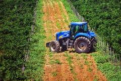 Blauwe tractor onder wijngaarden tijdens zomer Stock Afbeeldingen