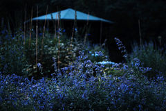 Blauwe tuin Stock Fotografie