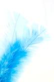 Blauwe veer Royalty-vrije Stock Afbeelding
