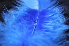 Blauwe Veer Stock Afbeeldingen