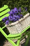 Blauwe viooltjes royalty-vrije stock fotografie