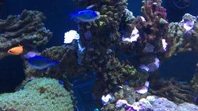 Blauwe vissen royalty-vrije stock fotografie