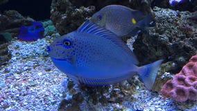 Blauwe vissen stock foto