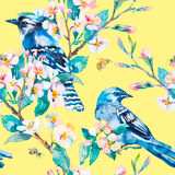Blauwe Vlaamse gaai op een bloeiende tak De lentevector Stock Afbeeldingen