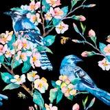 Blauwe Vlaamse gaai op een bloeiende tak honeybee Het patroon van de lente Vector watercolor Stock Fotografie