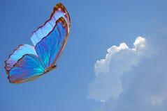 Blauwe vlinder Royalty-vrije Stock Foto's