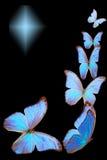 Blauwe vlinder Stock Fotografie