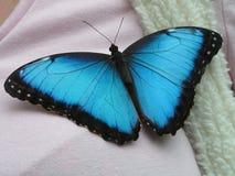Blauwe Vlinder Stock Foto
