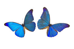 Blauwe Vlinder 8 Royalty-vrije Stock Foto