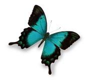 Blauwe vlinder die op wit wordt geïsoleerd stock afbeeldingen