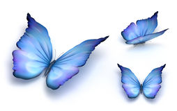 Blauwe vlinder die op wit wordt geïsoleerdb Stock Foto's
