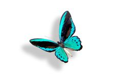 Blauwe vlinder met schaduw Royalty-vrije Stock Foto