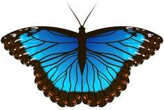 Blauwe vlinder Morpho Stock Afbeelding