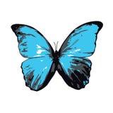 Blauwe Vlinder of Mot Stock Afbeeldingen