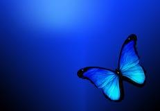 Blauwe vlinder onblue achtergrond Stock Foto