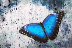 Blauwe vlinder op een marmer Stock Foto
