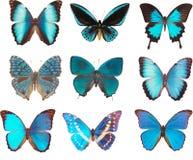 Blauwe vlinders stock afbeelding