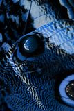 Blauwe vlindervleugel Royalty-vrije Stock Fotografie