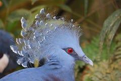 Blauwe Vogel Royalty-vrije Stock Afbeelding