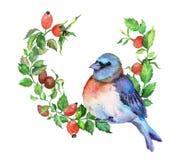 Blauwe vogel op de briar tak stock illustratie