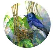 Blauwe vogel op nest in bladeren Waterverfillustratie in cirkel stock illustratie