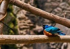 Blauwe vogel op tak Royalty-vrije Stock Afbeelding